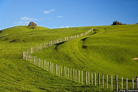 New Zealand, Wellington, Gladstone, blue sky, clouds, farmland, fence