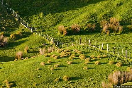 New Zealand, Otago, Portobello, Pukehiki, farmland, fence, green