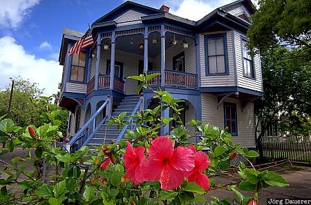 Galveston, United States, Texas, historic house, Victorian, flower, red flower